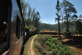 Tren de Nanu Oya a Ella (16)