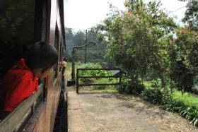 Tren de Nanu Oya a Ella (39)