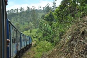 Tren Kandy a Nanu Oya (115)