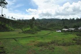 Tren Kandy a Nanu Oya (122)