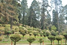 Darjeeling (100)