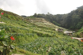 Cameron Highlands (197)