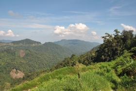 Cameron Highlands (2)