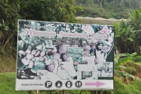 Cameron Highlands (280)