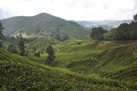 Cameron Highlands (316)