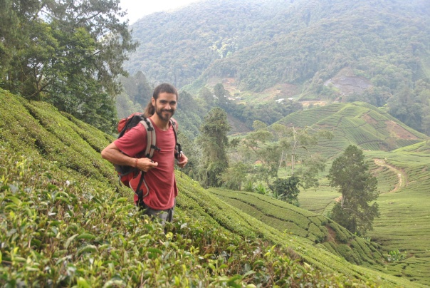 Cameron Highlands (325)