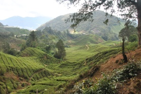 Cameron Highlands (337)