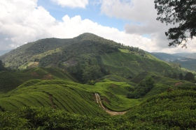 Cameron Highlands (354)
