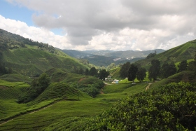 Cameron Highlands (356)