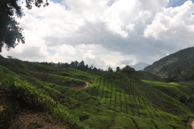Cameron Highlands (363)