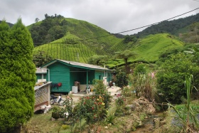 Cameron Highlands (388)