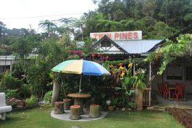 Cameron Highlands (396)