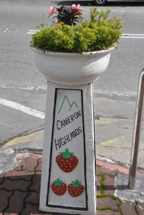 Cameron Highlands (400)