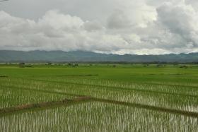 Luang Namtha (107)