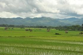 Luang Namtha (108)