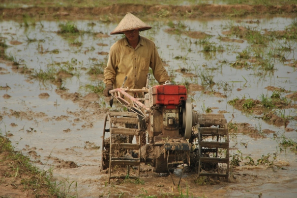 Luang Namtha (152)