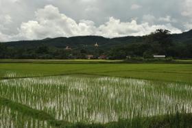 Luang Namtha (94)