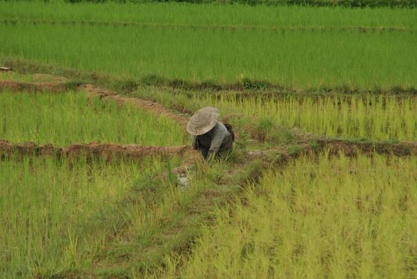 Luang Namtha (97)