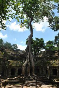 Siem Reap (401)