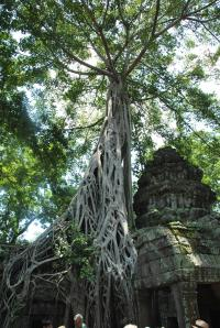 Siem Reap (417)