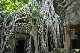 Siem Reap (422)