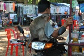 Siem Reap (530)