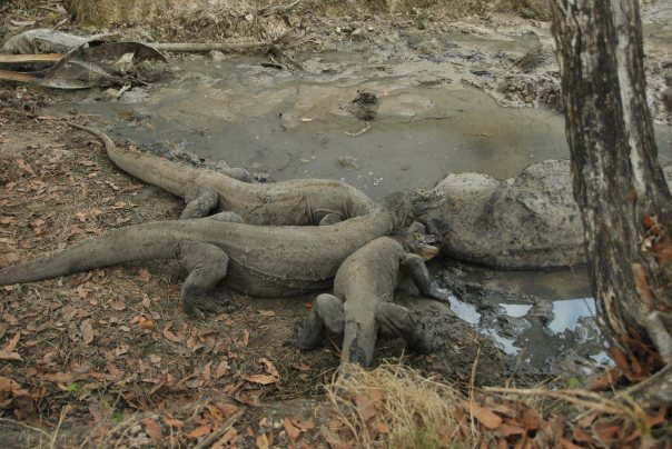 Vida abord i dragons de Komodo (137)
