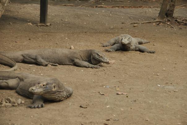 Vida abord i dragons de Komodo (162)