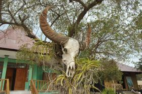 Vida abord i dragons de Komodo (165)