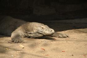 Vida abord i dragons de Komodo (79)
