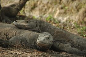 Vida abord i dragons de Komodo (93)