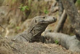 Vida abord i dragons de Komodo (96)