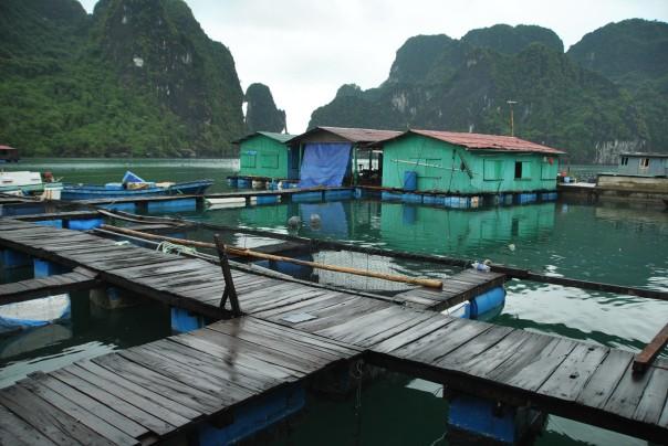Halong Bay (189)
