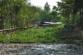 Delta Mekong (339)