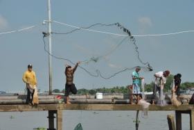 Delta Mekong (381)