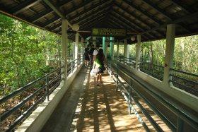 Phi Phi Island (1)