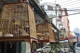 Tercera vegada a Bangkok (80)