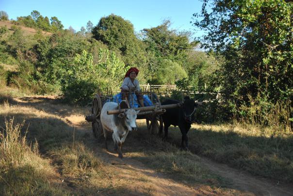 Kalaw i trek Inle (280)