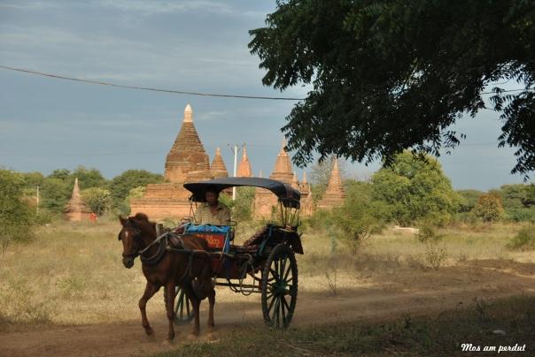 Bagan (118)