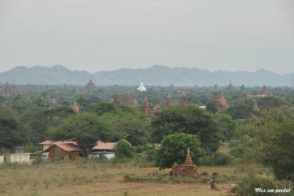 Bagan (401)