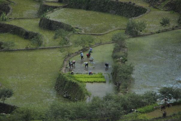 Banaue i Batad (208)