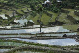 Banaue i Batad (209)