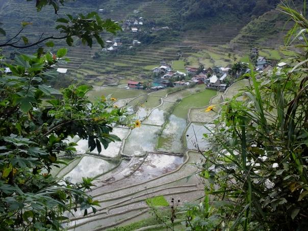Banaue i Batad (288)