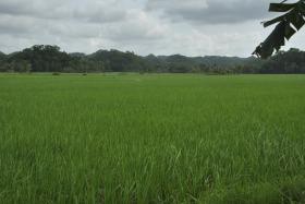 Bohol (144)