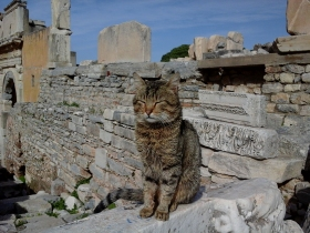 Selçuk i Ephesus (120)
