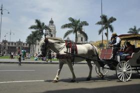Lima (137)