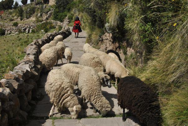 Llac Titicaca (289)