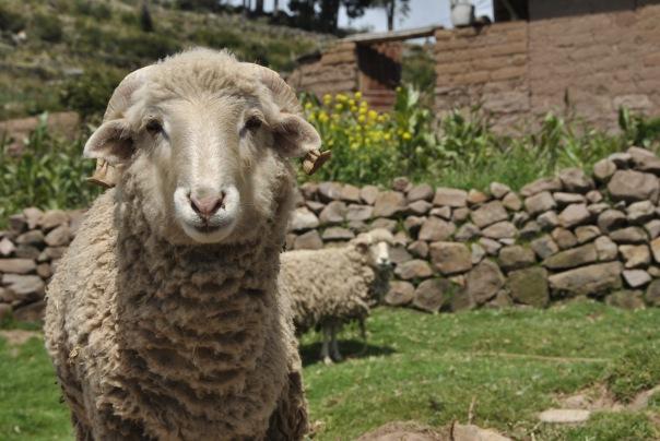Llac Titicaca (295)