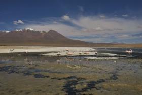 Salar de Uyuni (525)