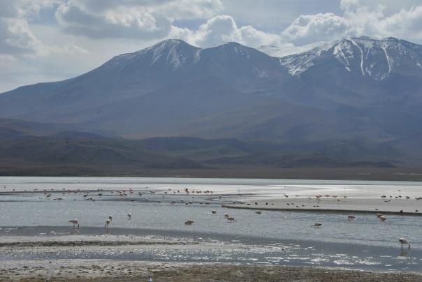 Salar de Uyuni (586)